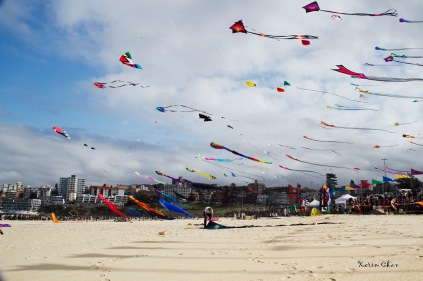 Kites Everywhere
